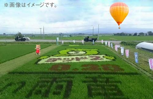 テッド収穫祭イメージ500.jpg